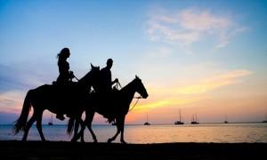 horses_k