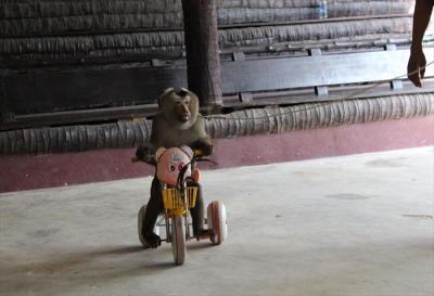 monkey-show1_k2
