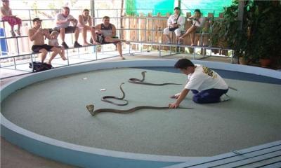 snakeshow1_k2