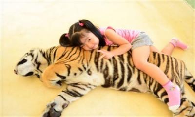 tiger1_k2